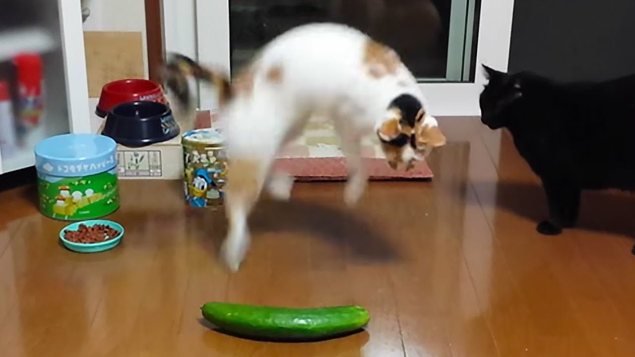 Cat + Cucumber = HORROR